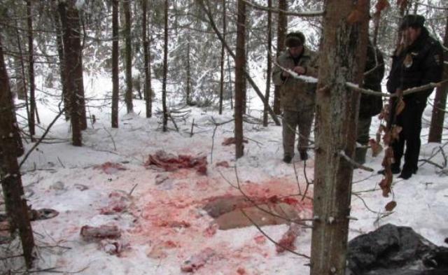 В Смоленской области с поличным задержаны браконьеры