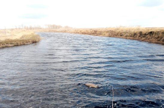 Экоактивисты: источник неприятного запаха в Белгороде – поля фильтрации