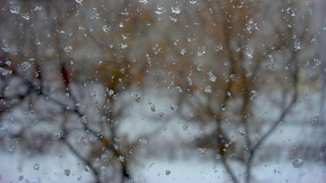 О погоде в Смоленской области на 11 декабря