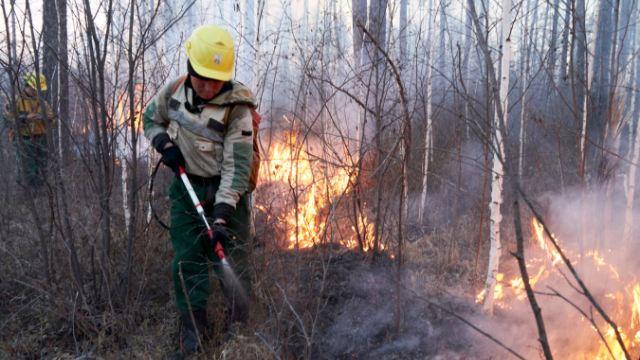 C 14 по 20 мая, лесопожарные службы и привлеченные лица ликвидировали 927 лесных пожаров в 43 регионах России